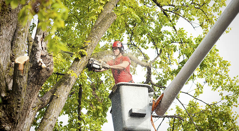Why Hire Professionals for Tree Cutting?